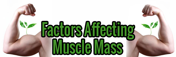 Factors Affecting Muscle Mass